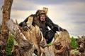 Картинка досуг, Шимпанзе, раздумья