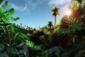 Картинка лес, пальма, Тропики