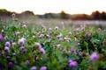 Картинка поле, природа, травы