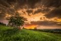 Картинка закат, поле, дерево