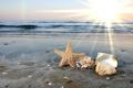 Картинка песок, море, солнце, звезда, раковины