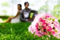 Картинка зелень, трава, девушка, макро, цветы, фон, widescreen