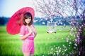 Картинка девушка, зонт, сакура, азиатка
