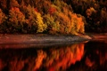Картинка лес, природа, фото, Осень, тропинка