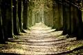 Картинка деревья, природа, стволы, тени, аллея