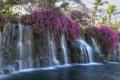 Картинка пальма, водопад, тропики, поток, цветы