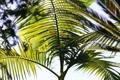 Картинка листья, ветки, пальма