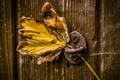 Картинка макро, лист, дверь