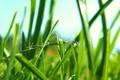 Картинка зелень, трава, природа, зелёный, макро фото