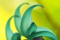 Картинка цветок, экзотика, лепестки