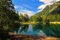 Картинка зелень, лес, лето, небо, солнце, облака, деревья