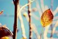 Картинка листья, солнце, макро, ветки, желтый, фон, листик