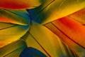 Картинка макро, цветные, перья, wallpapers