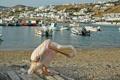 Картинка город, река, фото, дома, лодки, Греция, пеликан