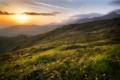 Картинка трава, облака, закат, цветы, Болгария, Стара Планина