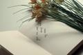 Картинка записка, страницы, текст, цветы