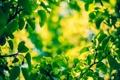 Картинка зелень, листья, макро, размытость, боке
