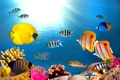 Картинка tropical, reef, coral, ocean, underrwater, fishes