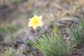 Картинка цветок, трава, размытие