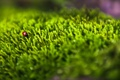 Картинка божья, трава, коровка