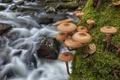 Картинка макро, река, грибы, мох, опята