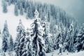 Картинка снег, ветки, елки, гора, сугробы