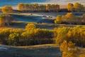 Картинка осень, деревья, природа, холмы, лошади, Китай, березы