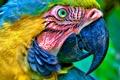 Картинка head, parrot, beak, eyes