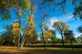 Картинка осень, небо, трава, листья, деревья, парк
