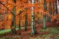 Картинка лес, осень, склон, деревья