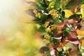Картинка листья, природа, растение