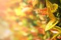 Картинка листья, природа, растения