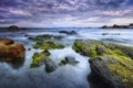 Картинка мох, тучи, камни, море