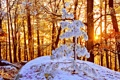 Картинка зима, лес, солнце, снег, природа, ель