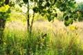 Картинка лето, свет, бабочки, природа, дерево