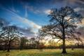 Картинка поле, деревья, пейзаж