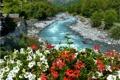 Картинка цветы, река, русло