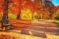 Картинка осень, деревья, парк, дорожка, лавка