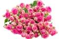 Картинка бутоны, roses, bouquet, розы, букет, flower buds, flowers