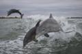 Картинка море, брызги, дельфины