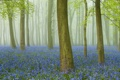 Картинка лес, трава, деревья, цветы, туман, ствол
