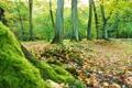 Картинка лес, деревья, листва