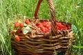Картинка земляника, трава, лето, корзина, ягоды