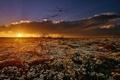 Картинка поле, цветы, природа, утро