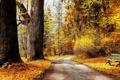 Картинка дорожка, золотая, желтые, осень, листья, кусты, деревья