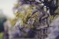 Картинка сиреневые, зеленые, ветки, природа, забор, размытость, цветы