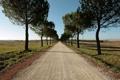 Картинка дорога, поле, лето, деревья
