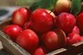 Картинка яблоки, сливы, корзина, солнце, лето