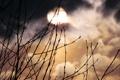 Картинка фотографии, природа, растения, ночь, месяц, луна