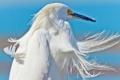 Картинка небо, ветер, птица, перья, клюв